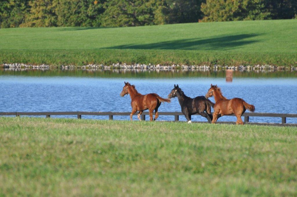 Horse farm tours in lexington ky blue grass tours for Horse farm